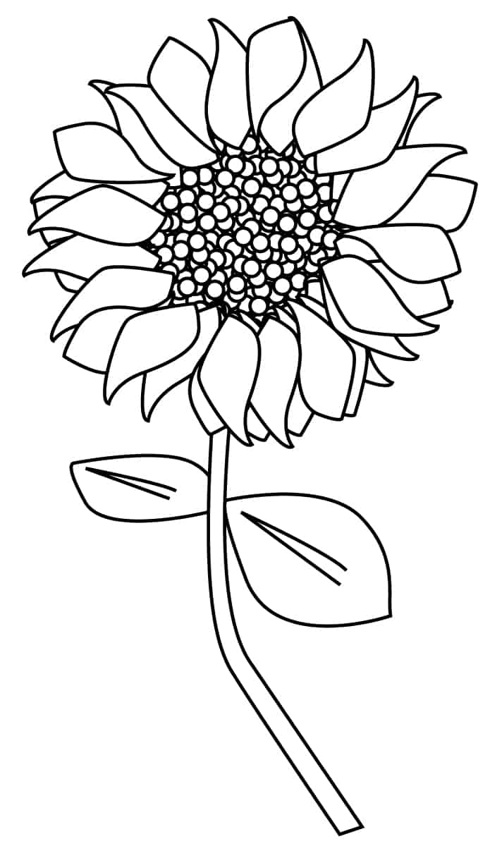 free sunflower drawing download